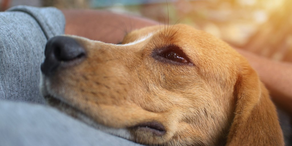 10 Ways to Build a Stronger Bond with Your Dog - The Dog Blog