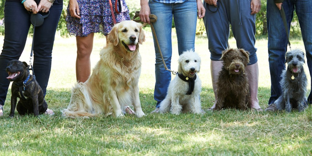 How to Choose the Right Obedience School for Your Dog - The Dog Blog